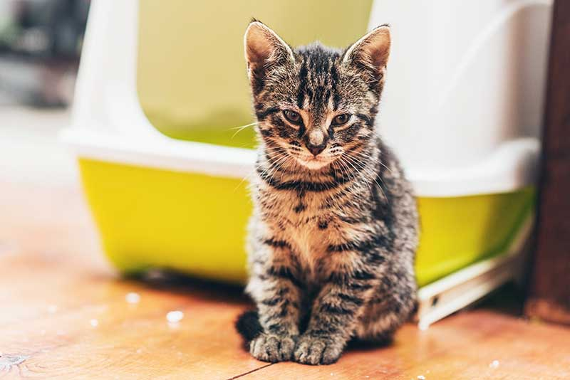 Urinary Problems in Cats - All The Best Pet Care