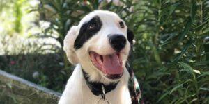 Dog Gone Seattle adoption event